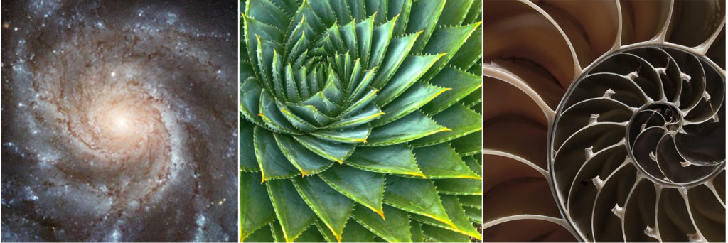 Fibonacci sequence, the basic structure that is the makeup of every living thing